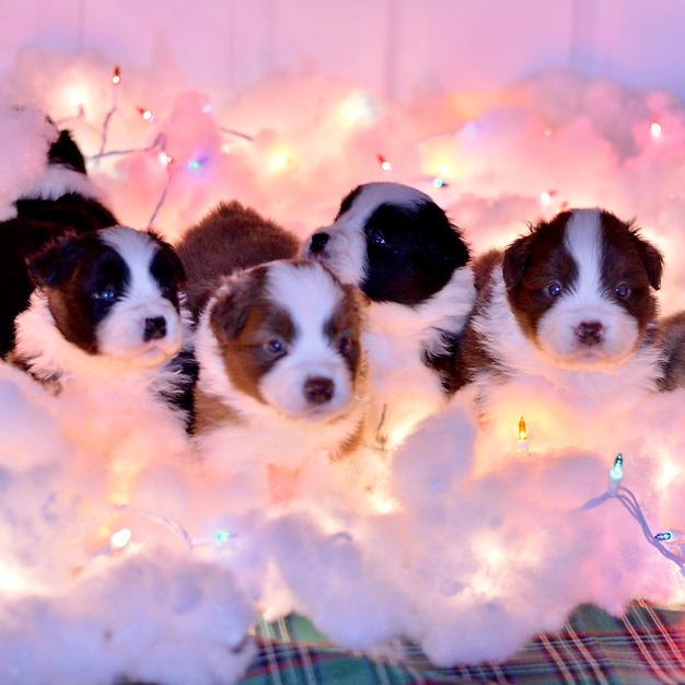 CURRENT PUPS