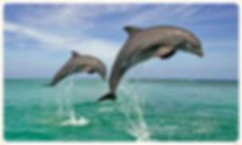 Naples boat tours - wildlife