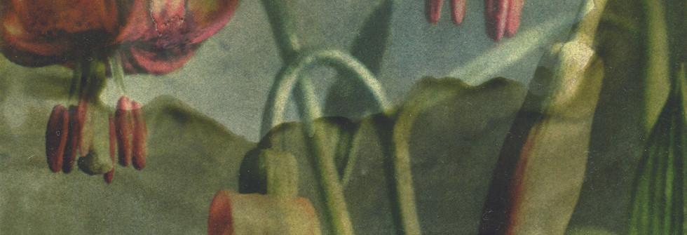 Encyclopédie V, Wax on printmaking, 23 x 20cm, 2018