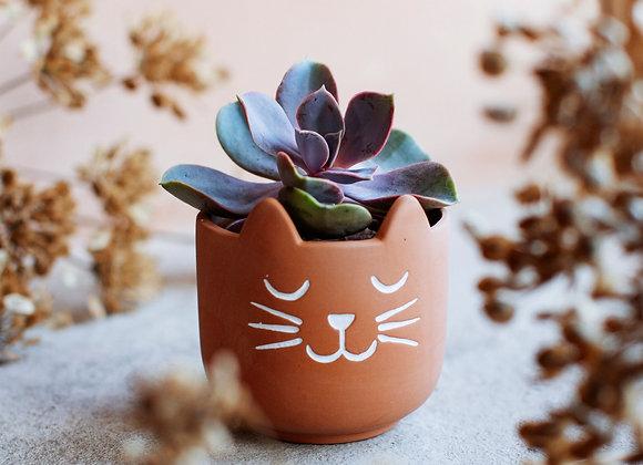 Mini Cat Planter