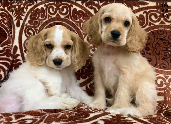 Puppies | Riverhead | The Puppy Experience