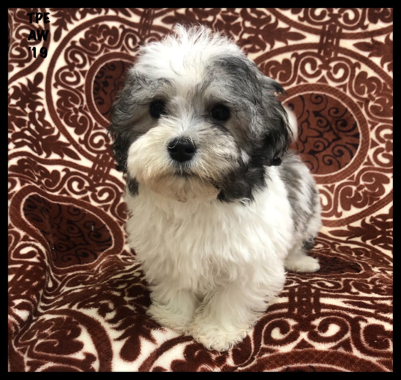 Current Residents | Riverhead | The Puppy Experience