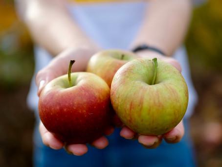 Apfel-Cheesecake mit Walnuss Streuseln