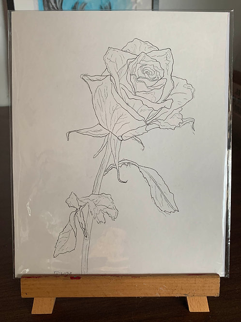 """8x10"""" Botanical Ink Drawing"""
