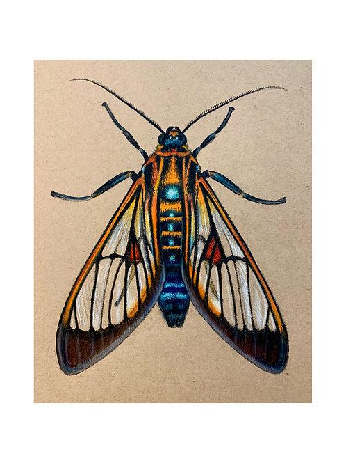 """""""Wasp Moth"""" #27 of 31"""