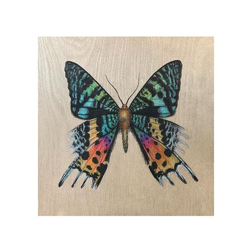 """Madagascan Sunset Moth"" #31 of 31"