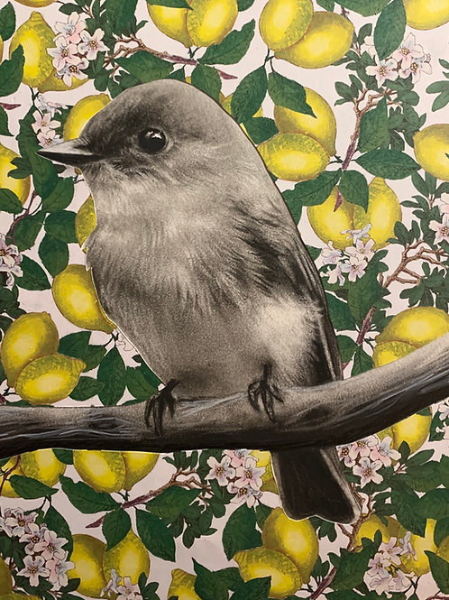 """Bird & Lemons"" Charcoal and Mixed Media 8x10"""