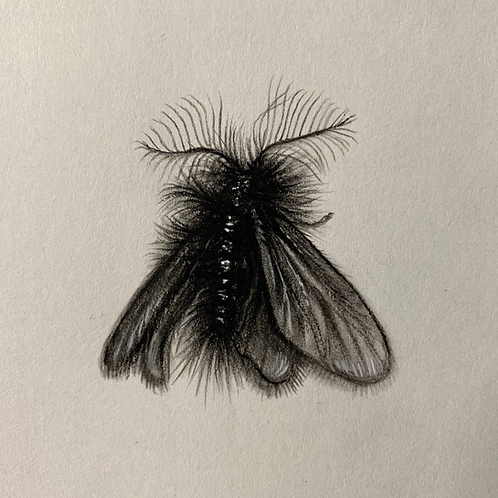 """Swiss Bagworm Moth"" #11 of 31"