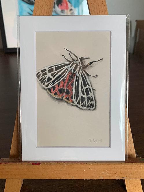 """Tiger Moth""  #1 of 31"