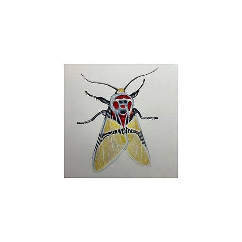 """Clown Face Moth"" #24 of 31"