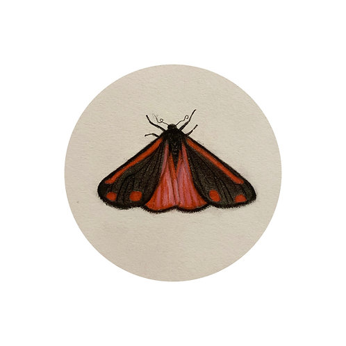 """Cinnabar Moth"" #22 of 31"
