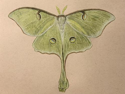 """""""Luna Moth"""" #7 of 31"""