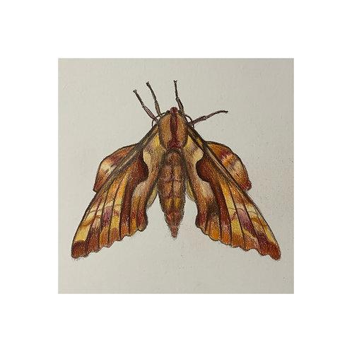 """Hawk Moth"" #12 of 31"