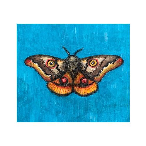 """Moth Quick Study"" #9 of 31"