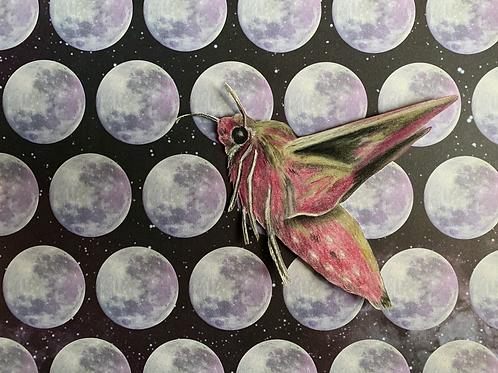 """Elephant Hawk Moth II"" #16 of 31"
