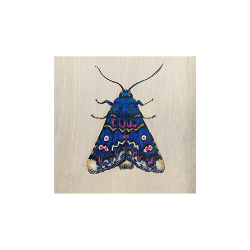 """""""Lily Moth"""" #29 of 31"""