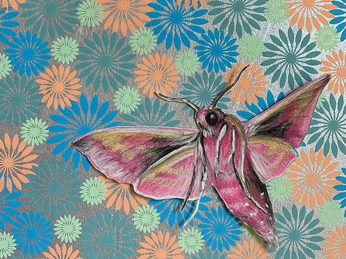"""Elephant Hawk Moth"" #10 of 31"