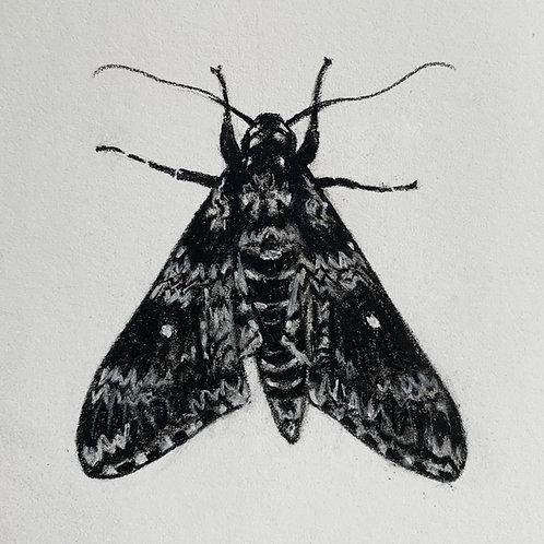 """Black Moth"" #14 of 31"