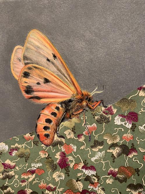 """Orange Moth"" #3 of 31"