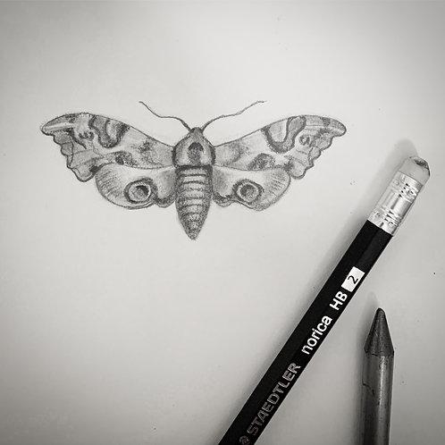 """Mini Moth"" #15 of 31"