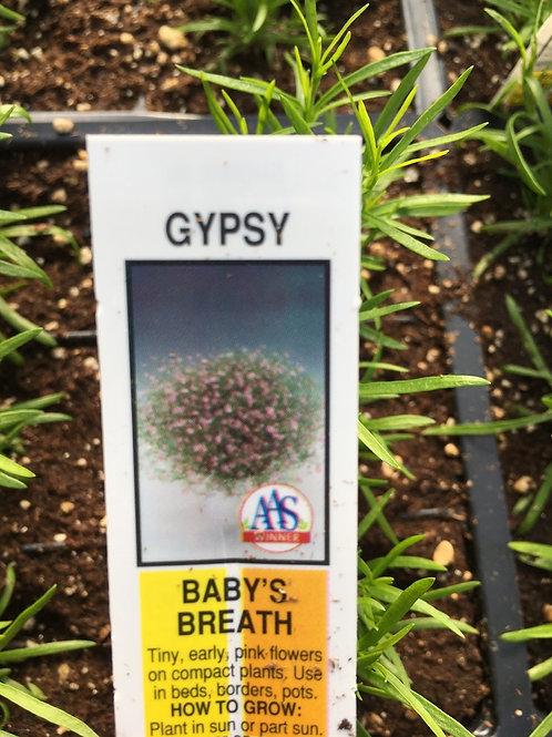 Gyposophilia (Baby's Breath) - 6-pack
