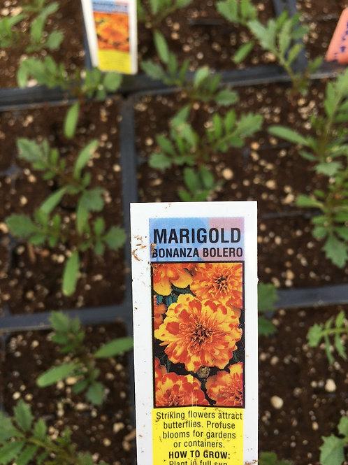 Marigold - Bonanza series