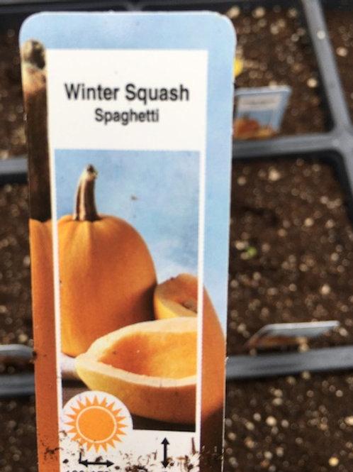 Squash - 4.5-inch pot