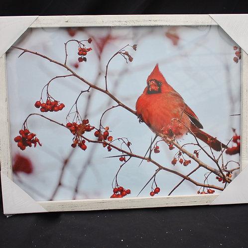 Cardinal print framed - LED lit
