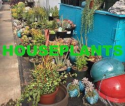 Houseplantbutton.jpg
