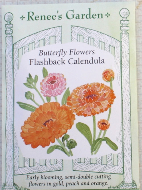 Renee's Garden Calendula - Flashback
