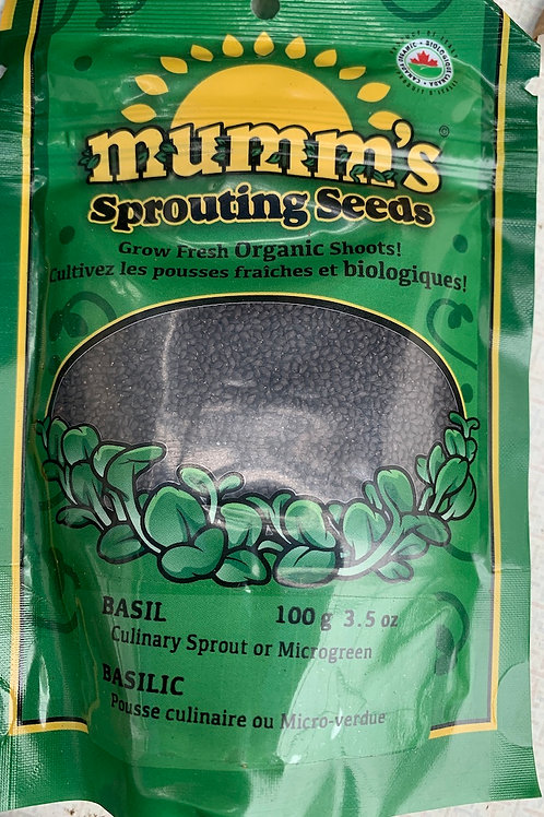 Sprouting Seeds Basil