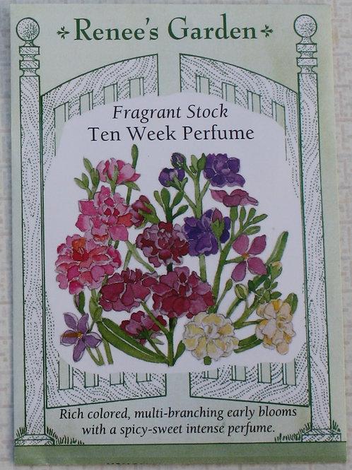 Renee's Garden Fragrant Stock - Ten Week Perfume