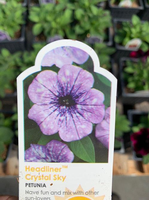Petunias - 12-inch Hanging Baskets