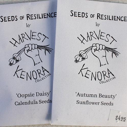 SOR 'Autumn Beauty' Sunflower