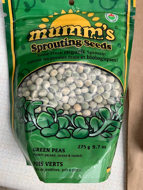 Sprouting Seeds Green Peas