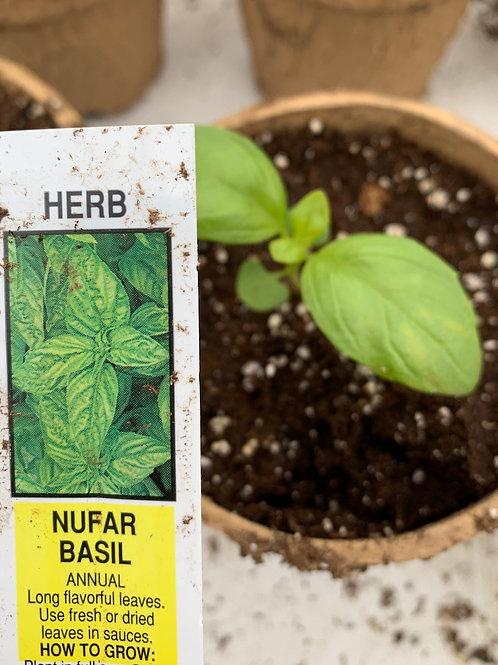 Nufar Basil - 4-inch eco-friendly pot
