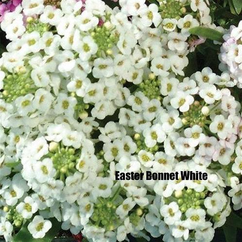 Alyssum - Easter Bonnet White