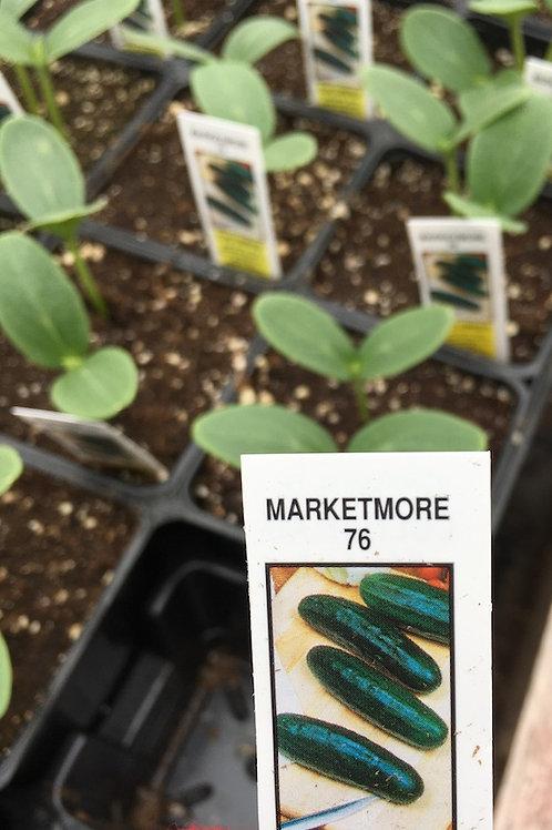 Cucumbers - 3.5-inch pot