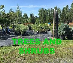 TreesShrubsbutton.jpg