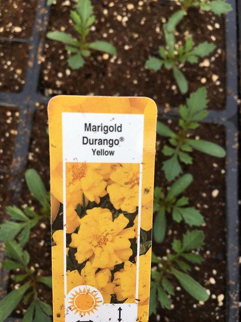 Marigold - Durango series