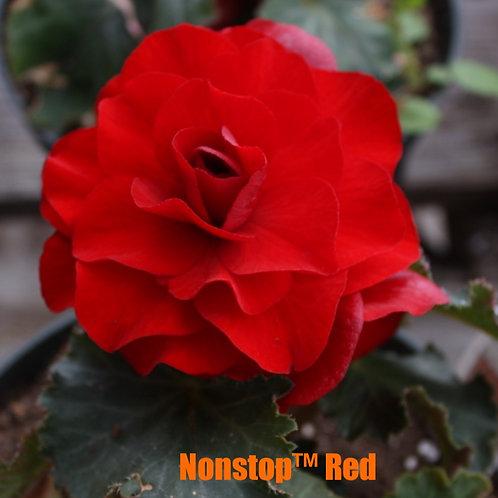 Begonia - Tuberous, Assorted Nonstop™ varieties