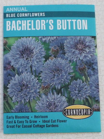 Cornucopia - Bachelor's Buttons - Blue Cornflowers