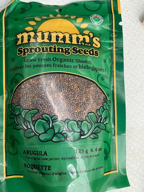 Sprouting Seeds Arugula