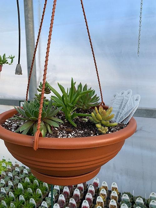 Succulent Hanging Bowl
