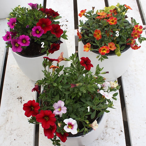 Potted Annuals in White Egg-Shaped Pot