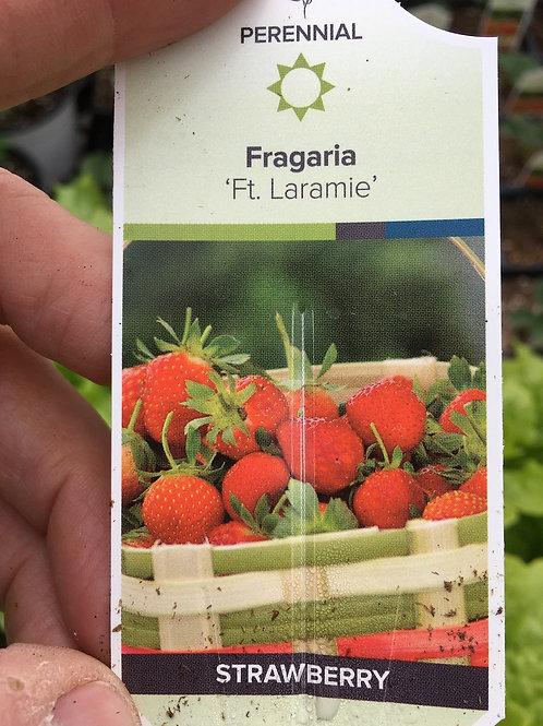Strawberry - 3.5-inch pot