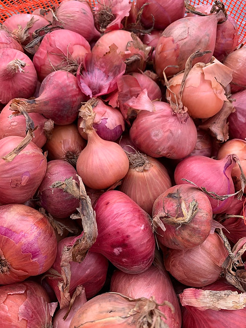 Multipler Onions - 12-count