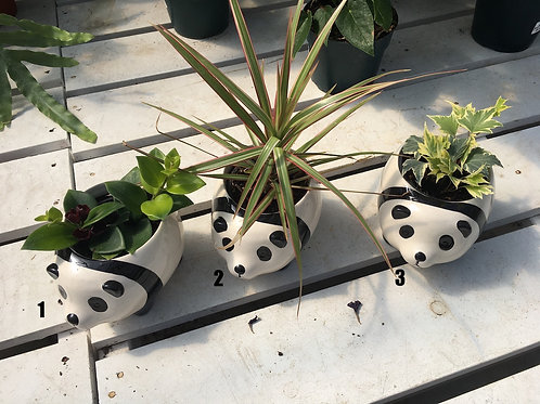 Panda Planter with 4-inch house plant