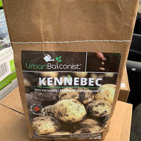 Urban Balconist - Kennebec seed potatoes - 1.36 kg bag