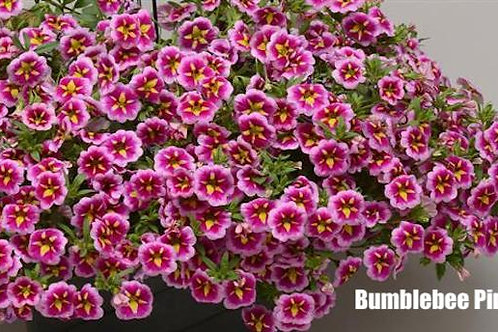 Calibrachoa ChaCha, Bloomtastic and other varieties